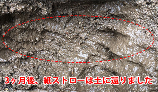 紙ストローを土に埋めて3カ月後に掘り返した画像(生分解実験)の写真